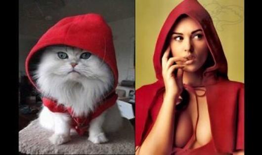 gatto-cappuccetto-roso